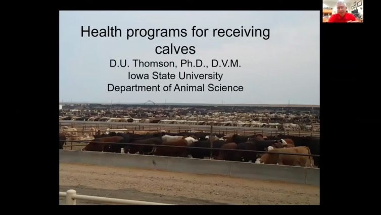 link to Arrival Health Programs for High-Risk Calves