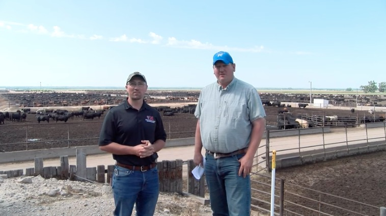 link to Calf Health Management on Arrival – Producer Perspective