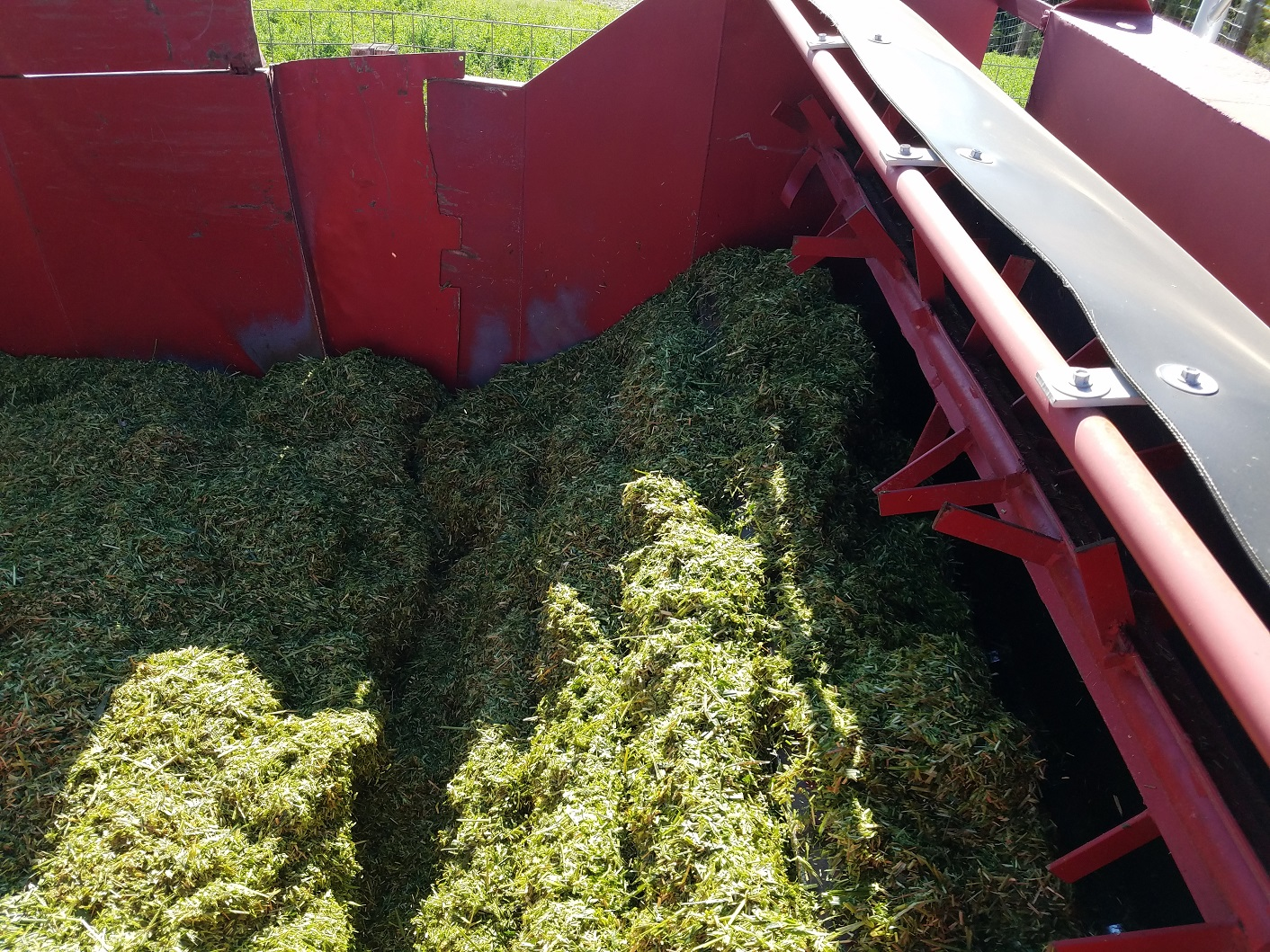 Chopped silage