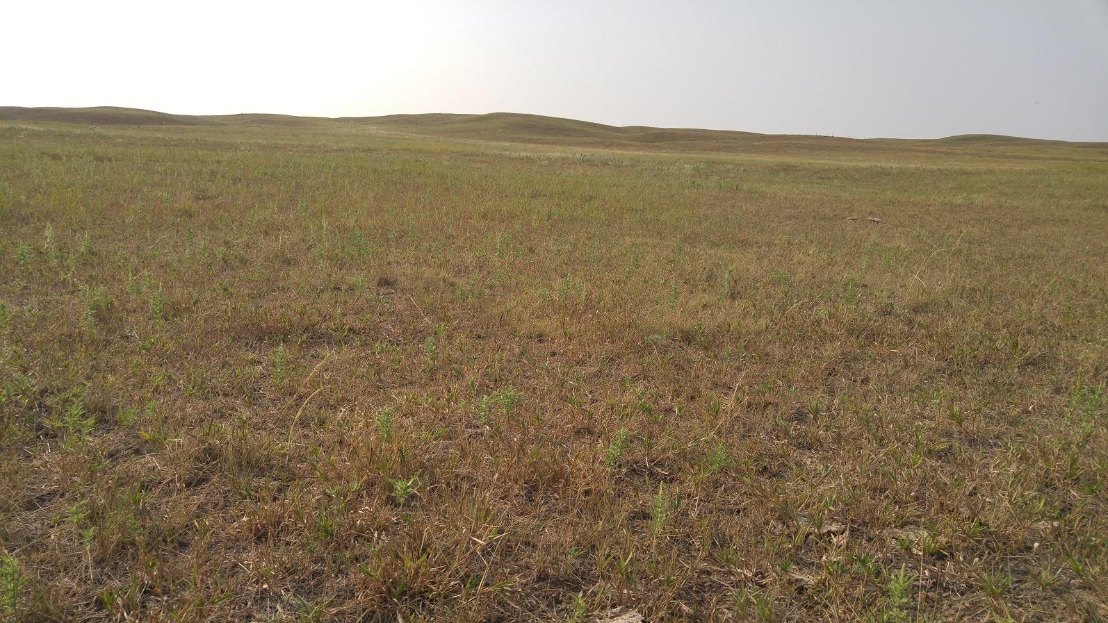 Grazed pasture