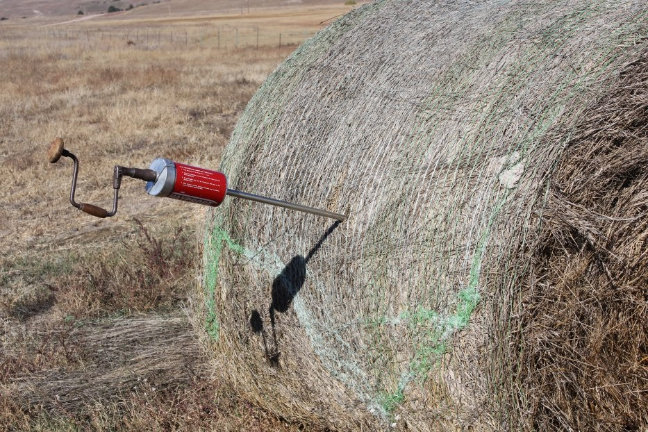 tester in a hay bale