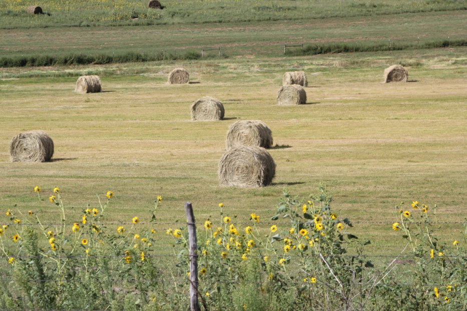 Bales on meadow