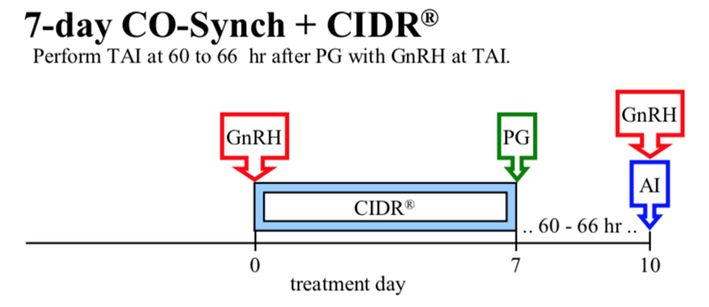 CO-Synch + CIDR diagram