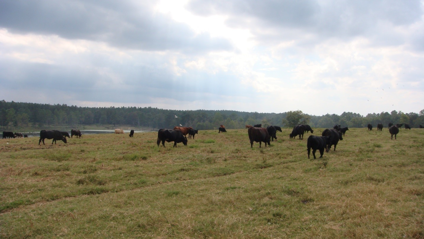Pasture based beef operations are generally exempt unless confined in a barn or open lot for more than 24 hours.