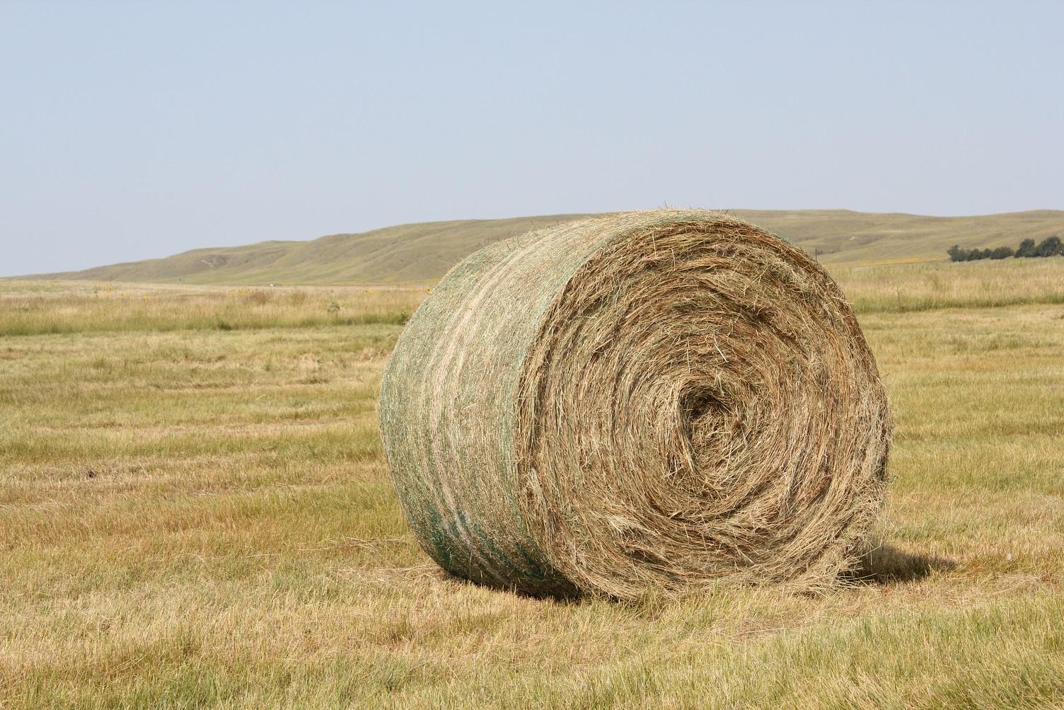 Bale of prairie hay