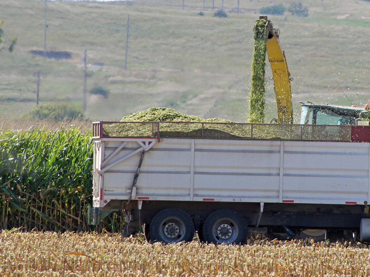 truck harvesting corn