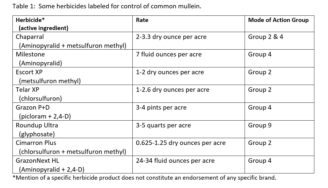 Herbicide for common mullein control