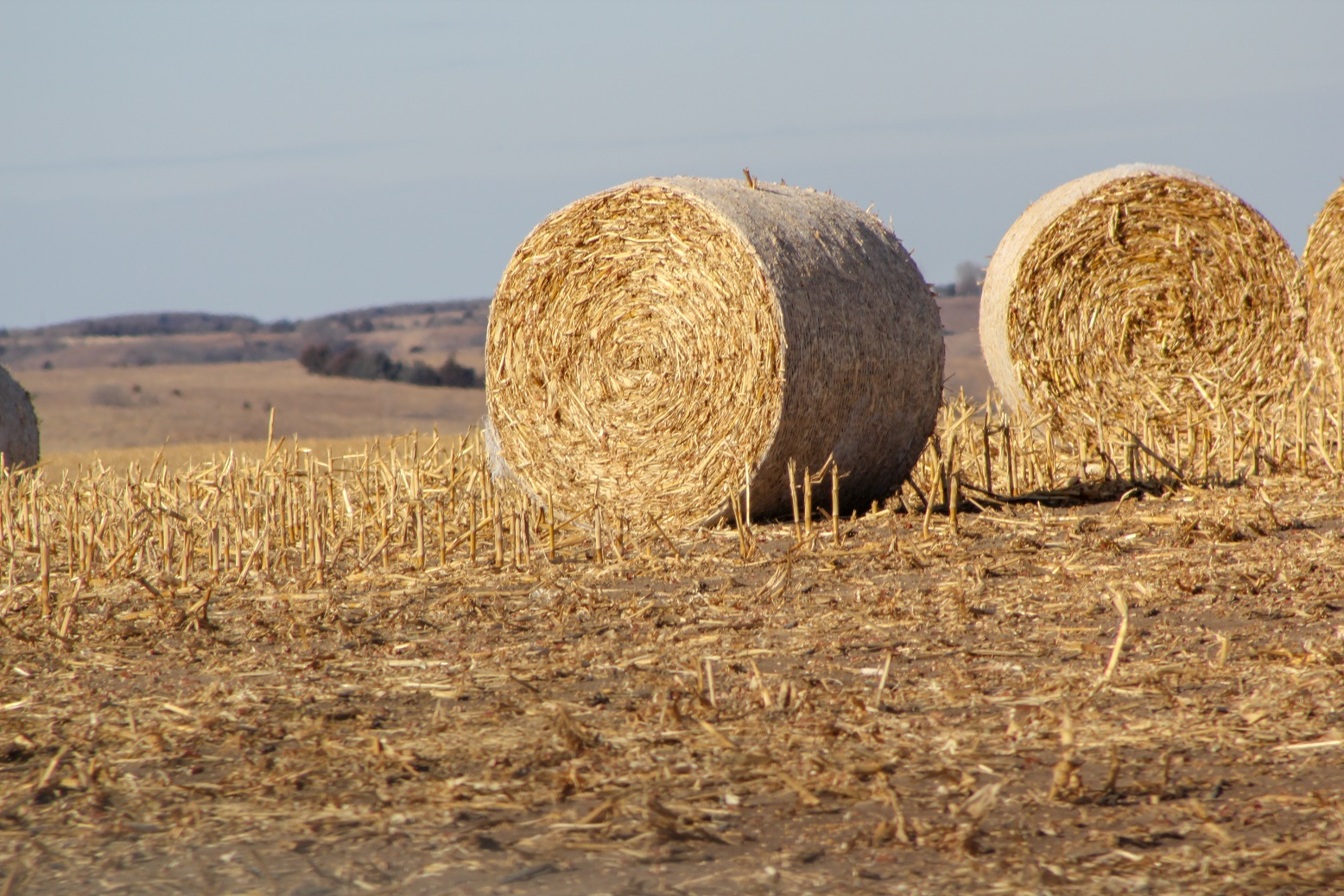 Cornstalk bales in field