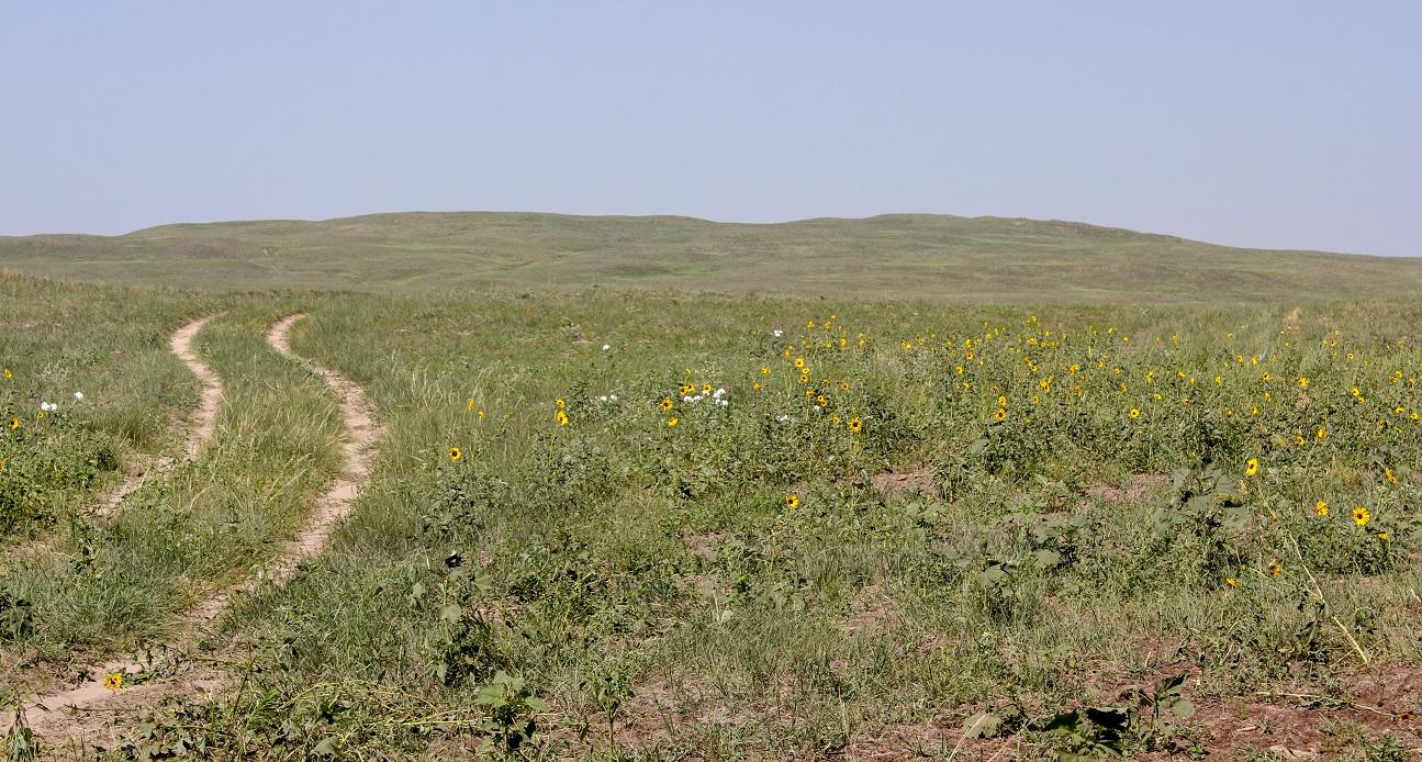 Sandhills rangeland