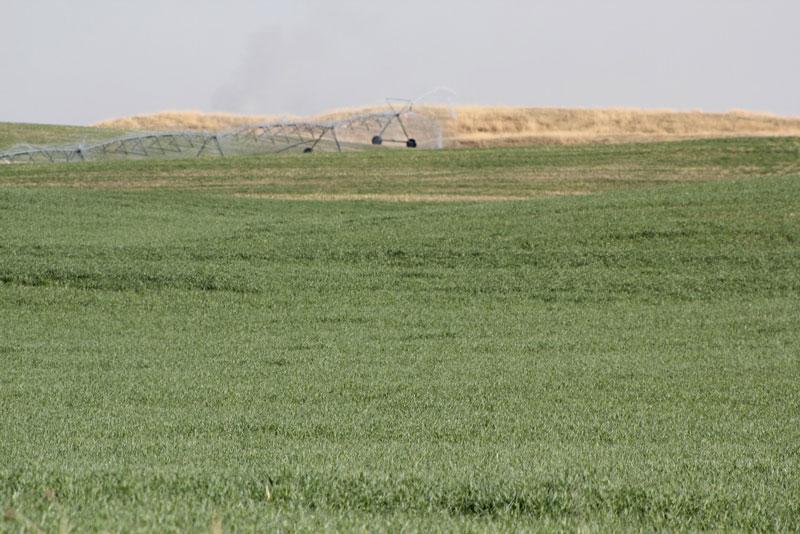 Cropland being irrigated