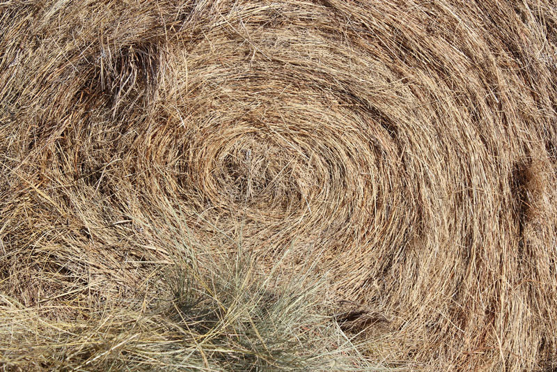 Close up of hay