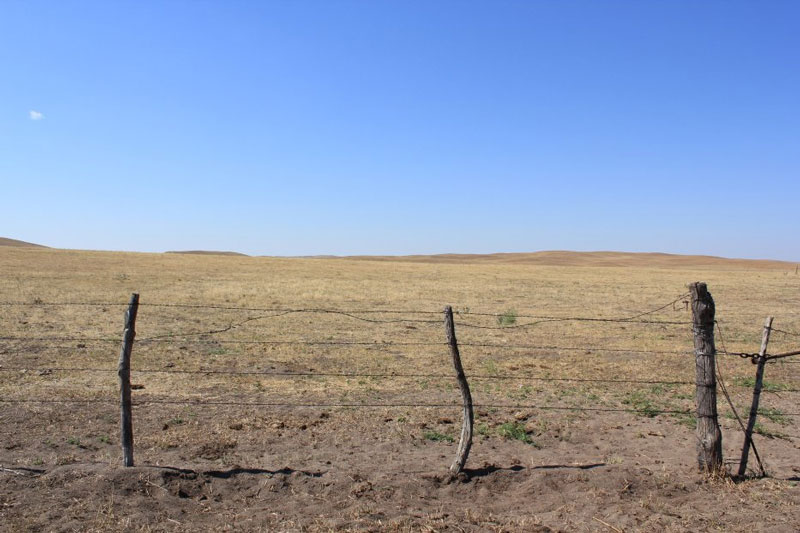 Pasture during drought