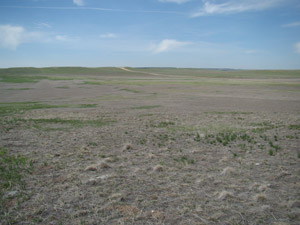 photo of drought-stressed pasture