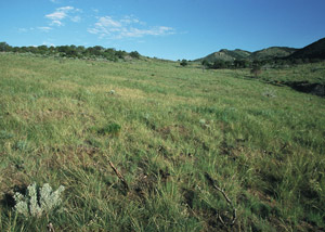 photo of green pasture of rolling hills
