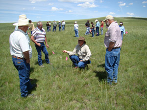 photo - participants in workshop examining field for pasture quality