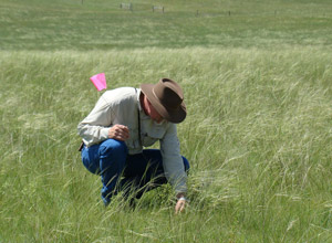 photo of man monitoring a pasture