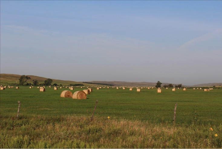 hay field with large round bales