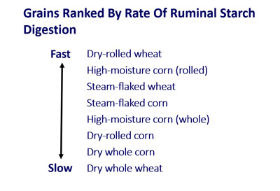 chart showing wheat and corn comparisons for fermentation