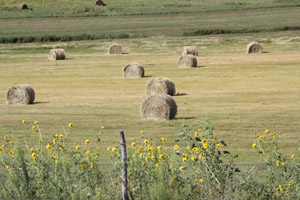 photo of large round hay bales in field