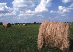photo - large round hay bale in field