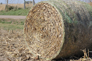 photo of large round bale of corn stalks