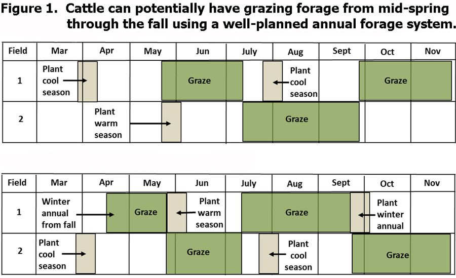 Figure 1 showing 2 options for annual forage systems plan