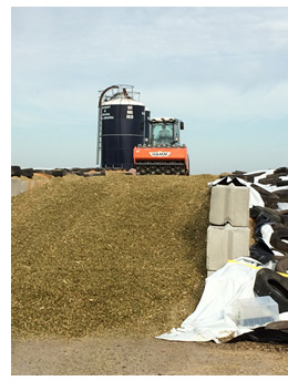 photo of silage in ground storage facility