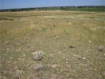 photo of drought affected pasture