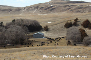 photo of Nebraska Sandhills pasture