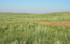 photo of pasture with large amount of weeds