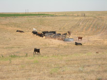 photo of pasture during drought