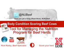 NUBeef-BCS screen capture